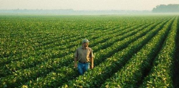 Campo cultivo yerba mate